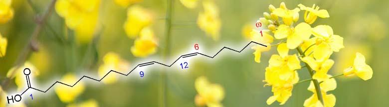 omega-6-masne-kiseline